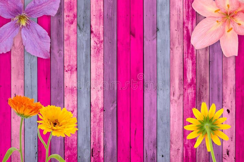 Fundo de madeira cor-de-rosa com flores fotos de stock royalty free