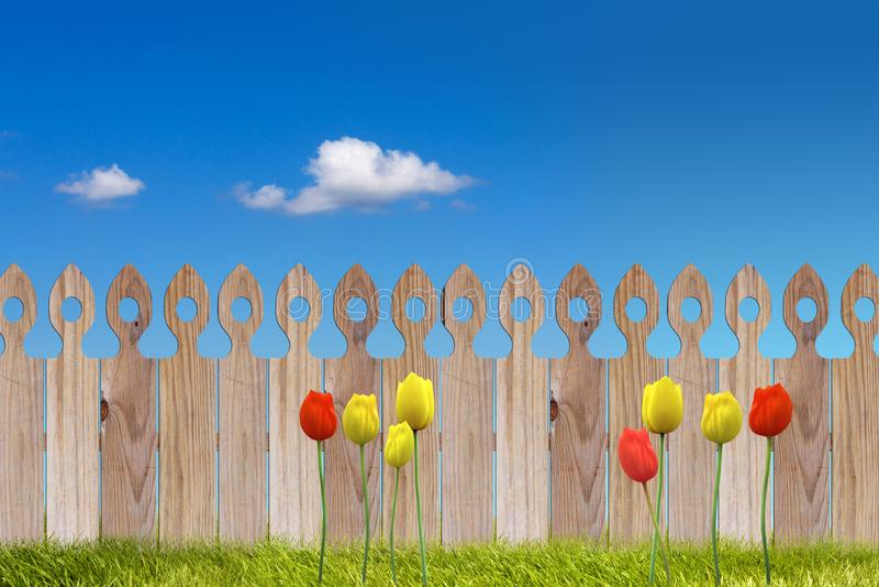 Fundo de madeira da cerca das tulipas do céu azul da mola ensolarada e da grama verde imagem de stock royalty free