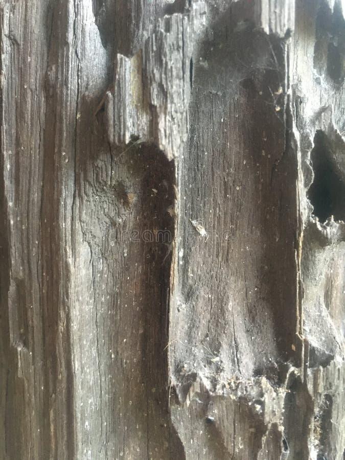 fundo de madeira da coluna imagem de stock