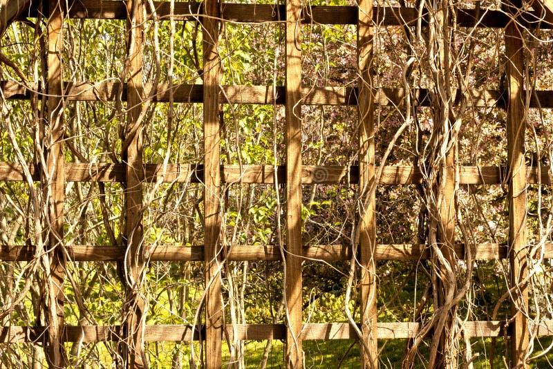 Fundo de madeira da estrutura foto de stock royalty free