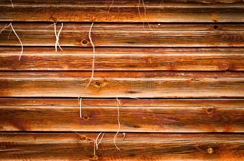 Fundo de madeira da textura com a planta que cresce para fora fotos de stock