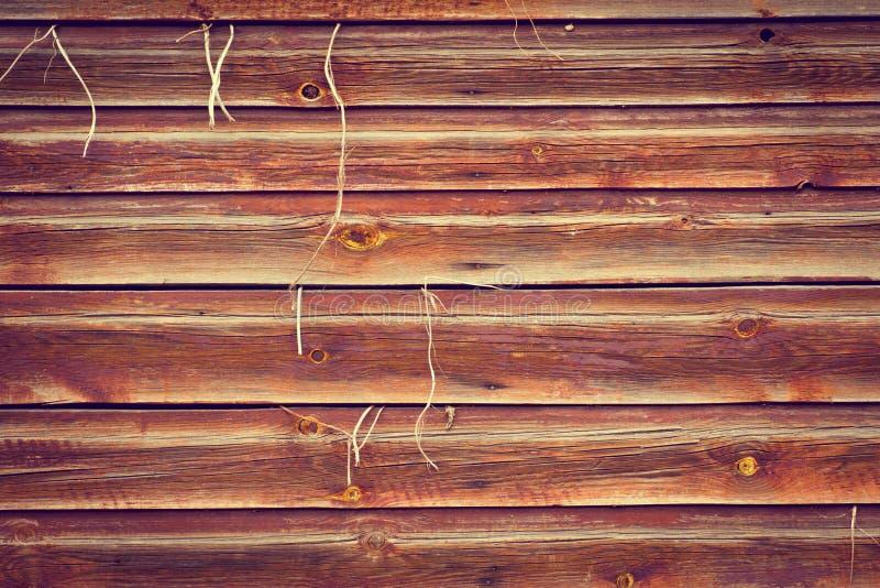 Fundo de madeira da textura com a planta que cresce para fora fotografia de stock