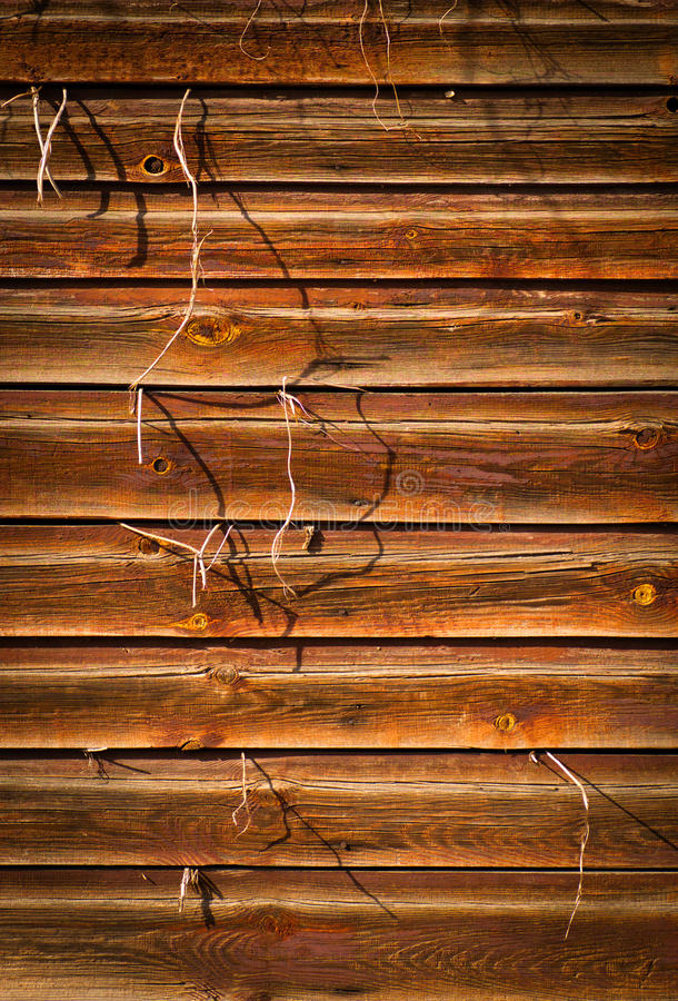 Fundo de madeira da textura com a planta que cresce para fora imagens de stock