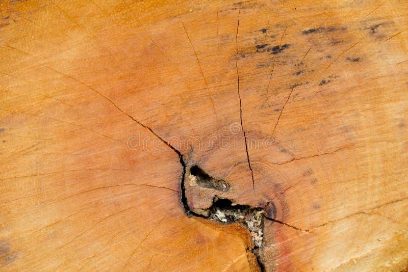 Fundo de madeira da textura do Close-up imagem de stock