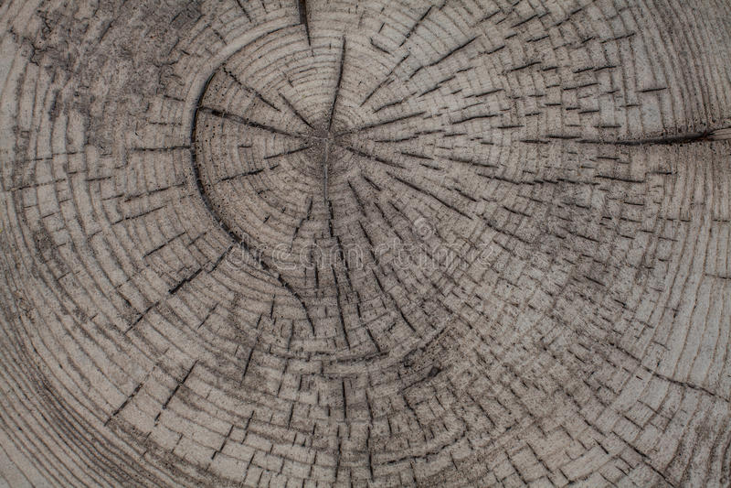 Fundo de madeira da textura do tronco de árvore imagem de stock royalty free