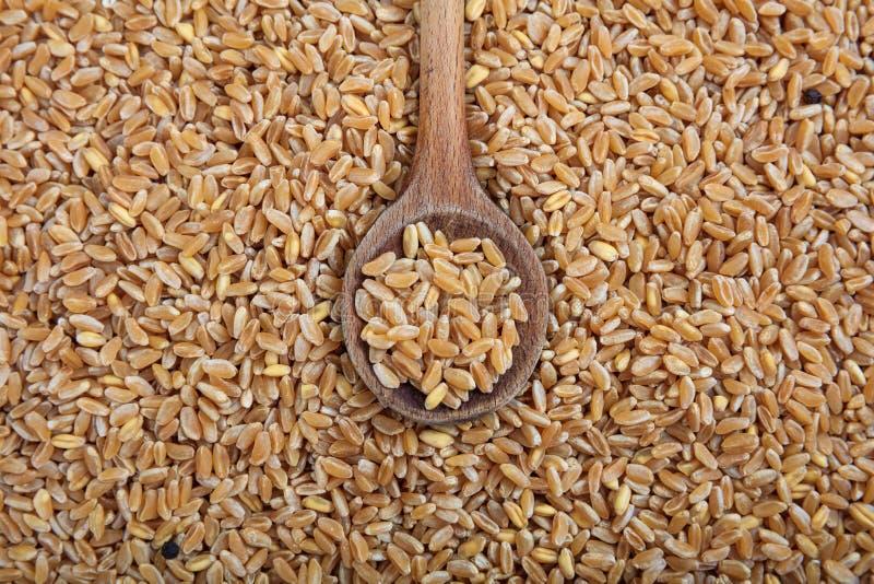 Fundo de madeira das sementes da colher e do trigo foto de stock