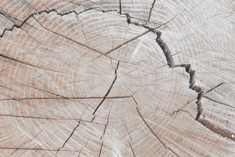 Fundo de madeira do coto Árvore reduzida redonda com anéis anuais como uma textura de madeira foto de stock royalty free