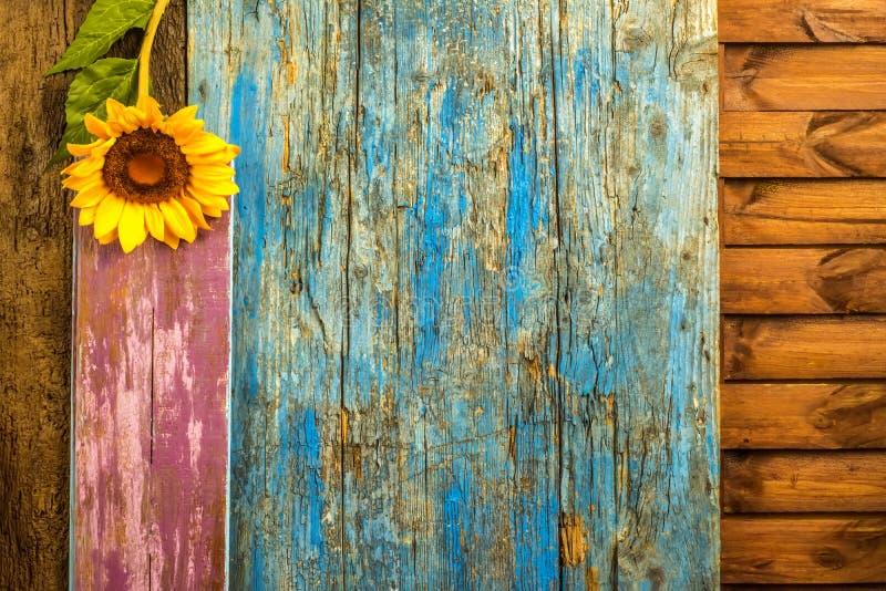 Fundo de madeira do girassol fotografia de stock