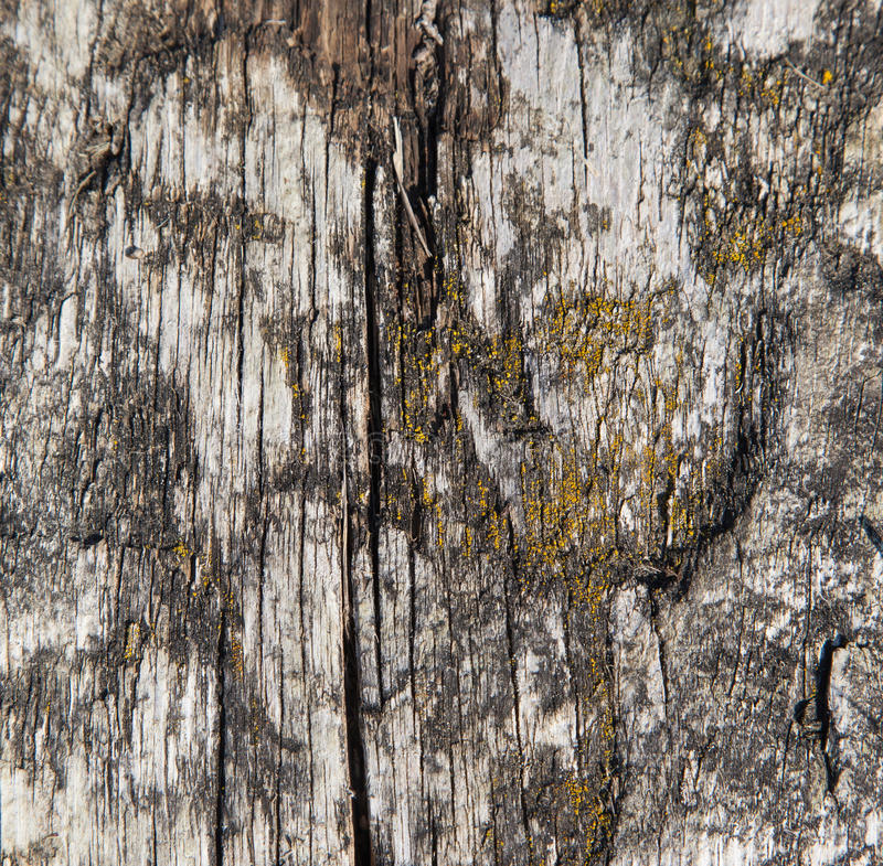 Fundo de madeira envelhecido da textura fotografia de stock
