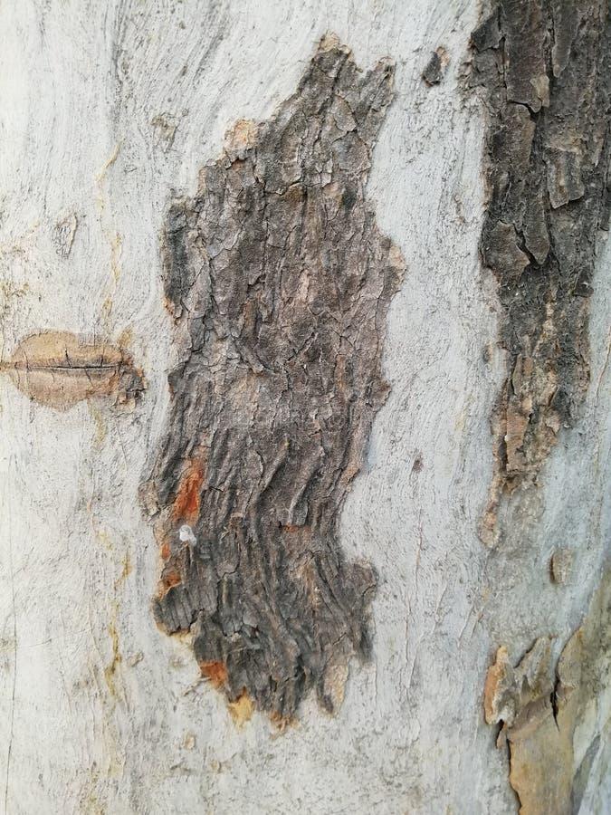 Fundo de madeira marrom branco e escuro claro velho da textura imagem de stock