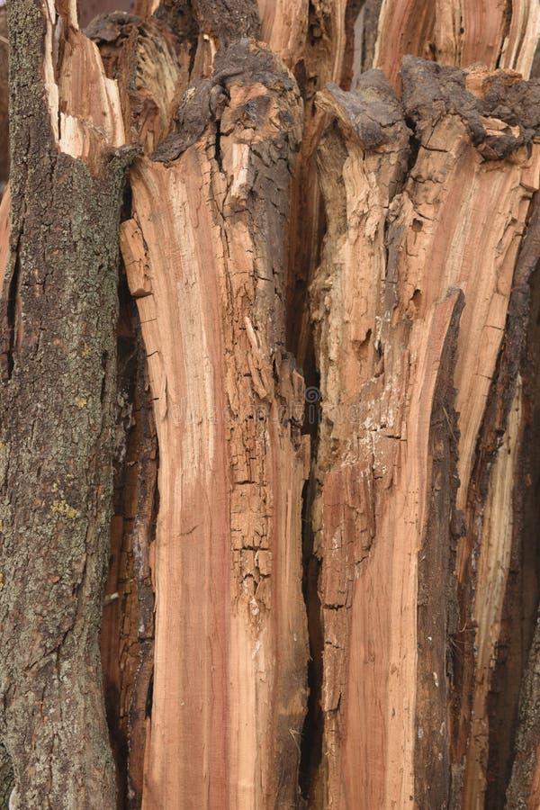 Fundo de madeira podre da textura da separação velha fotografia de stock
