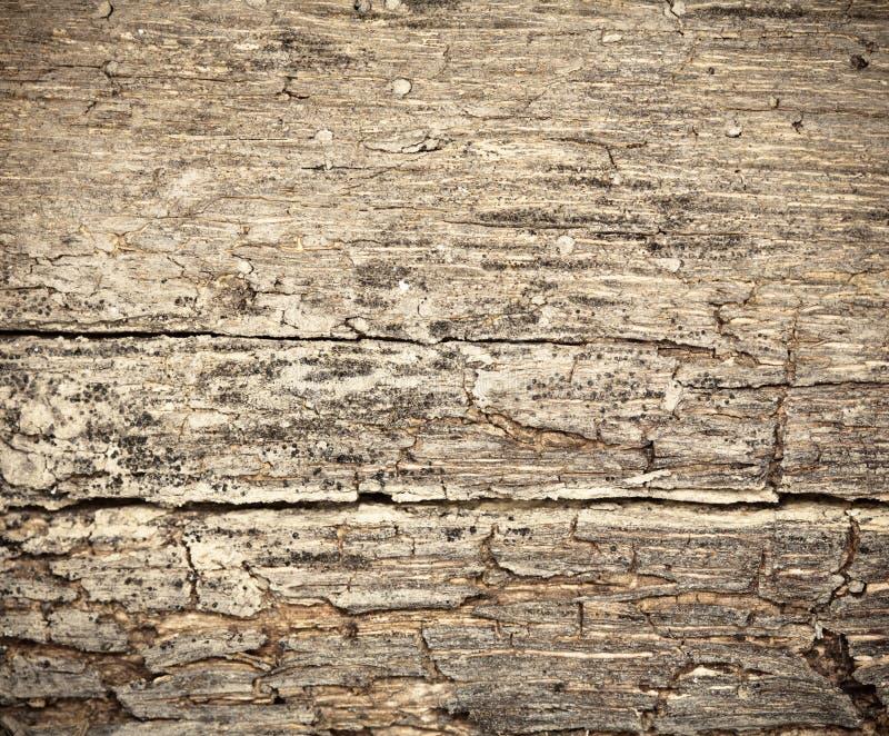Fundo de madeira seco Rotting foto de stock