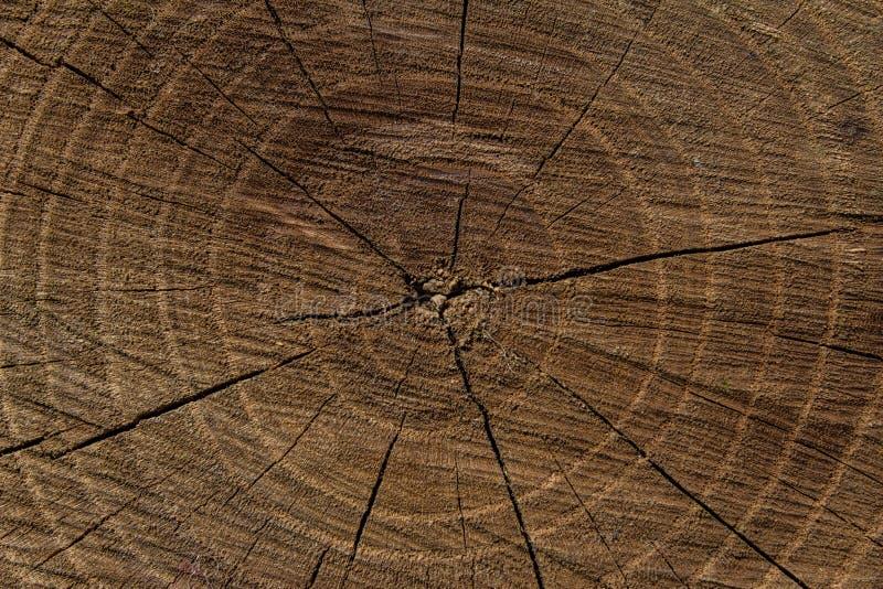 Fundo de madeira Textura Fundo do coto de árvore no conceito do eco da natureza fotos de stock