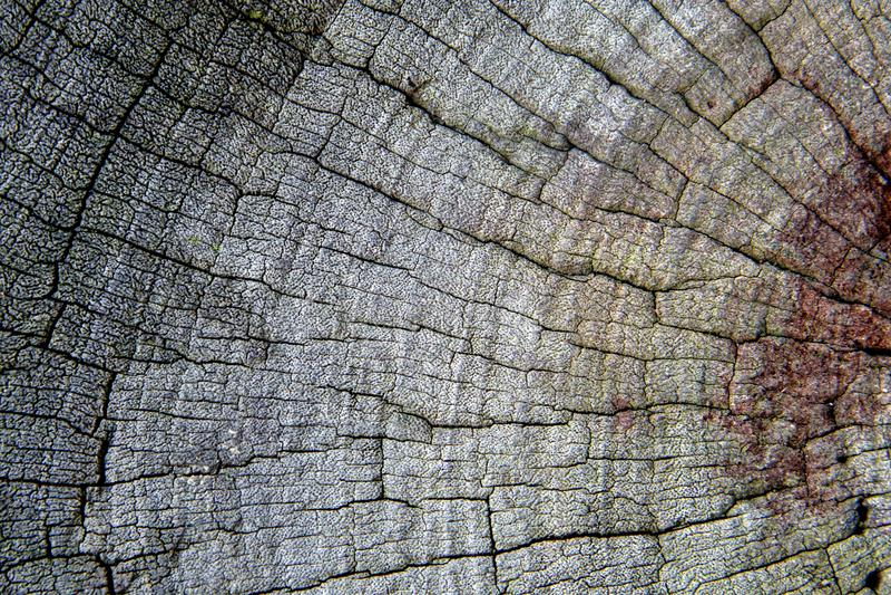 Fundo de madeira velho cinzento da textura foto de stock