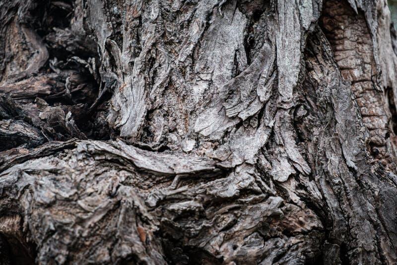 Fundo de madeira velho da textura da casca de ?rvore do vintage r?stico foto de stock royalty free
