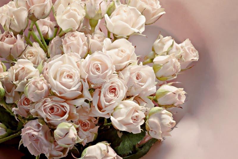Fundo de muitas rosas cor-de-rosa pequenas delicadas fotografia de stock royalty free