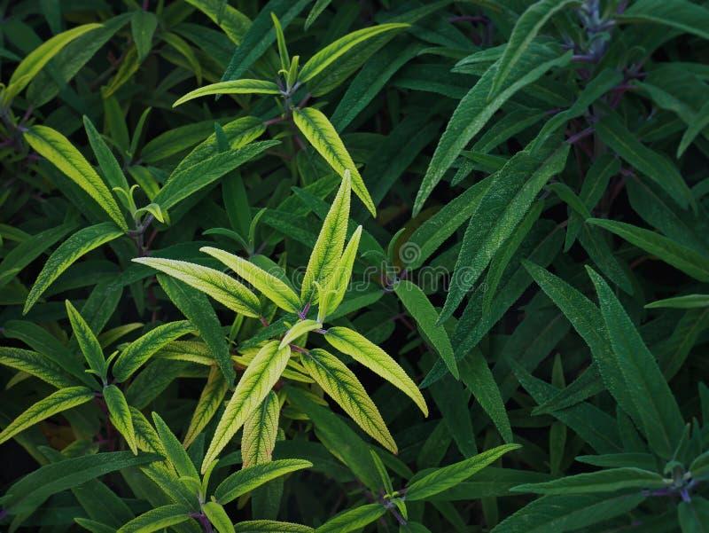 Fundo de plantas verdes com foco seletivo em claro - folhas verdes fotos de stock