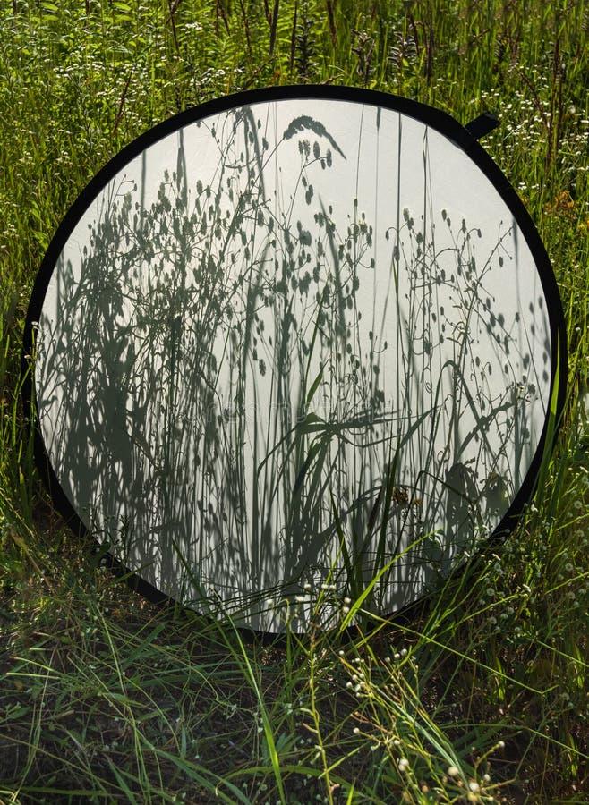 Fundo de sombras da grama no refletor difuso da foto no fundo de uma grama do campo fotografia de stock