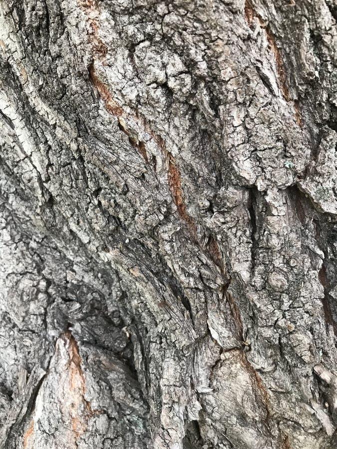 Fundo de textura de casca de árvore Fundo de casca de árvore imagem de stock royalty free