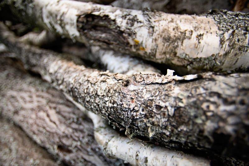 Fundo de troncos do vidoeiro, fim fotografia de stock royalty free