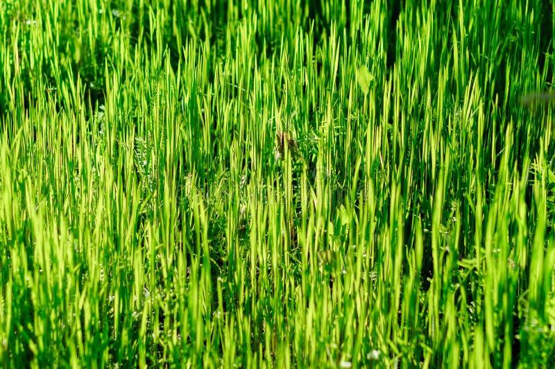 Fundo de uma grama verde imagens de stock