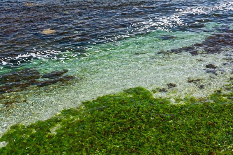 Fundo desobstruído da água de mar Superfície transparente do mar Seascape bonito da costa do Mar Negro perto de Tsarevo, Bulgária imagens de stock royalty free
