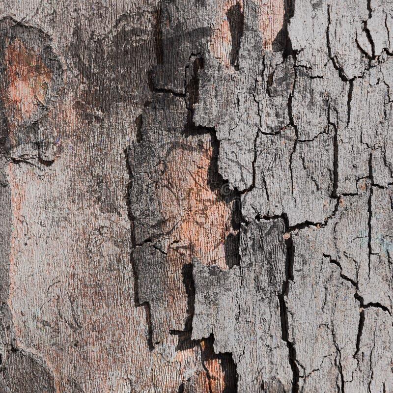 Fundo digital da casca de árvore imagens de stock