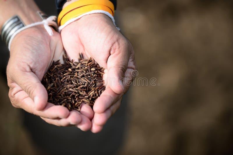 Fundo disponivel do weave do arroz de Riceberry imagem de stock