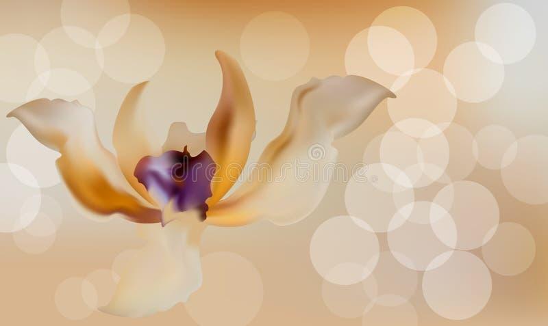 Fundo distorcido romântico da flor no vintage retro ilustração stock