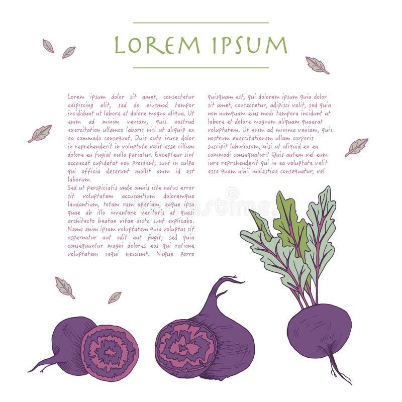Fundo do alimento com molde social branco tirado mão dos meios do vegetal de raiz da beterraba ilustração stock