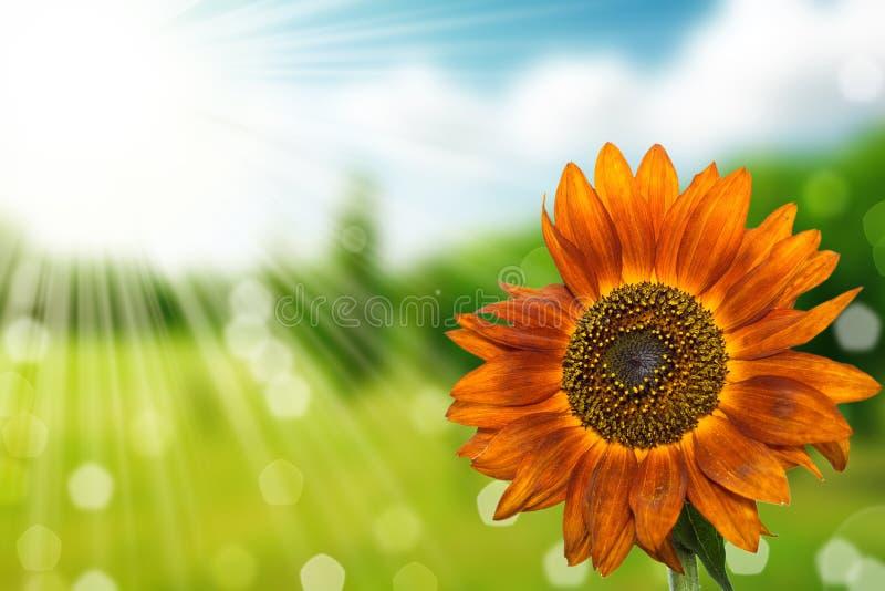 Fundo do bokeh da mola da flor e da natureza fotos de stock royalty free