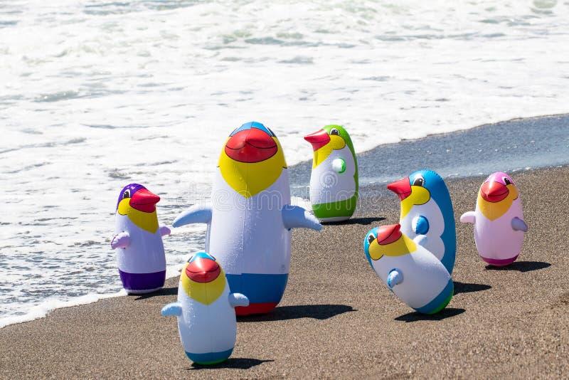Fundo do brinquedo da praia Foco seletivo em um grupo de sete brinquedos de borracha infláveis coloridos do pinguim em uma praia  fotos de stock royalty free