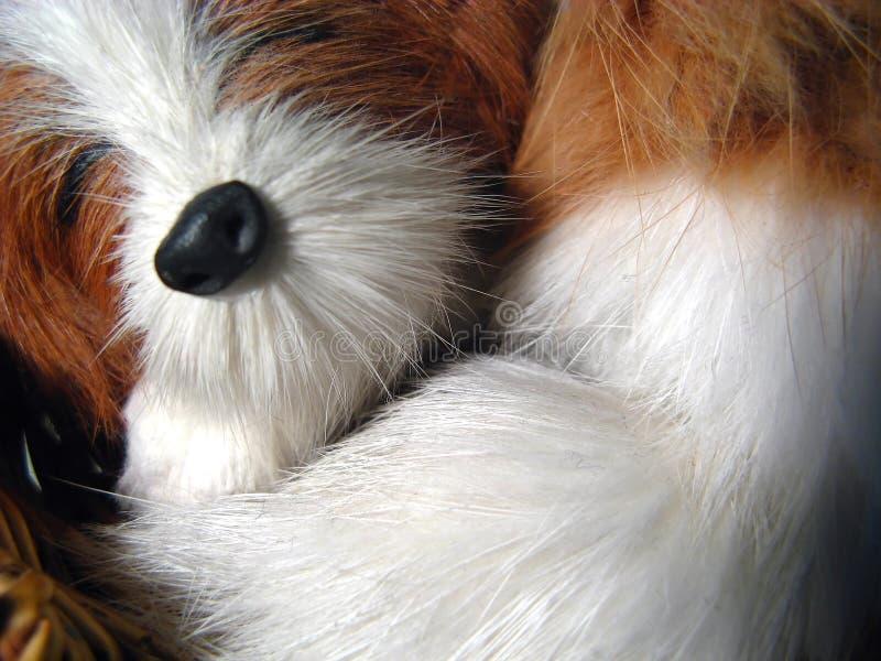 Fundo do cão de brinquedo imagem de stock royalty free