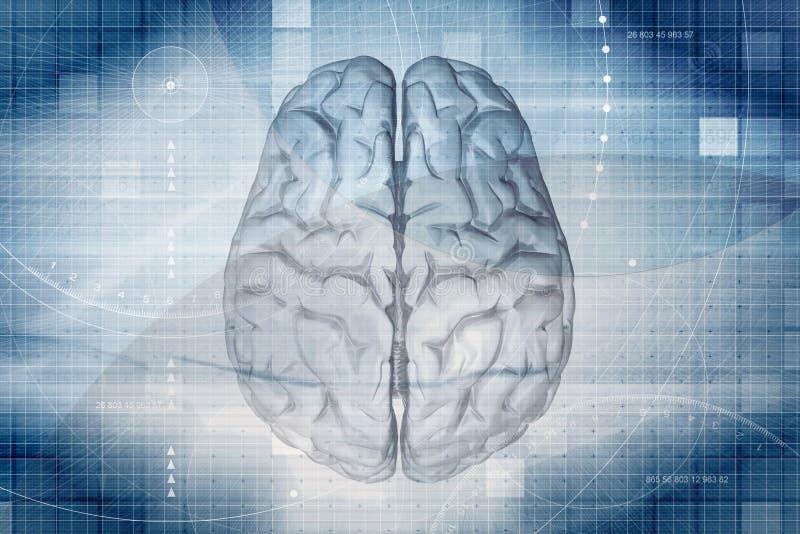 Fundo do cérebro ilustração royalty free