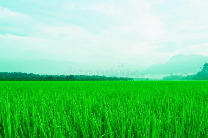 Fundo do céu azul e da grama verde fotos de stock royalty free