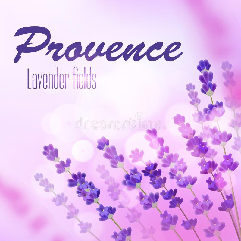 Fundo do campo da alfazema de Provence ilustração royalty free