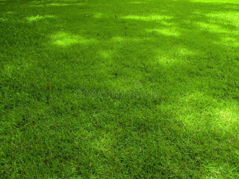 Fundo do campo de grama verde, textura, teste padrão foto de stock