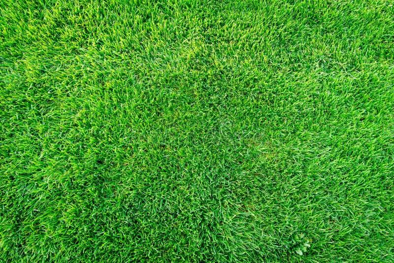 Fundo do campo de grama verde, textura, teste padrão fotografia de stock royalty free