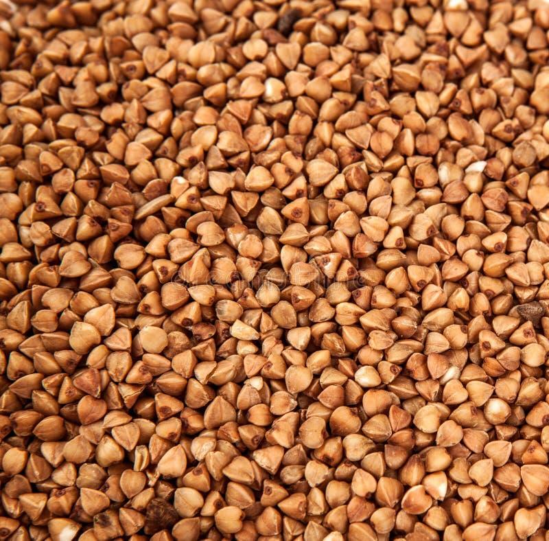 Fundo do cereal do trigo mourisco perto acima imagens de stock