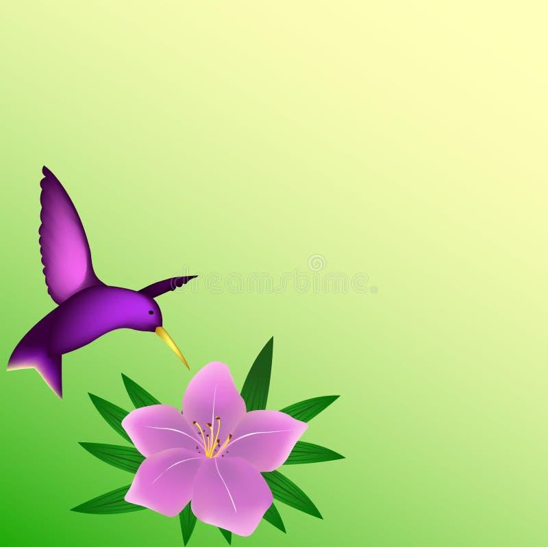 Fundo do colibri ilustração do vetor