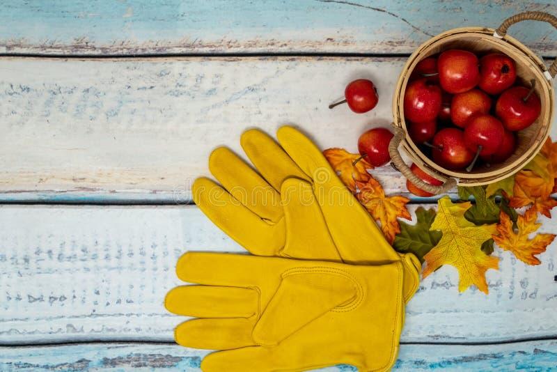 Fundo do conceito da colheita de Apple Maçãs pequenas em uma cesta, queda fotos de stock
