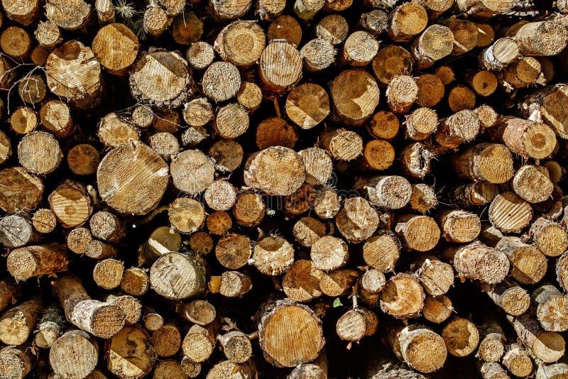 Fundo do coto de árvore foto de stock royalty free