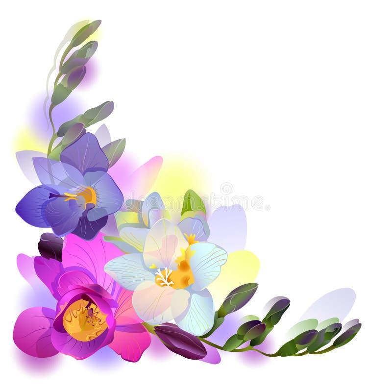 Fundo do cumprimento do vetor com flores do freesia ilustração royalty free