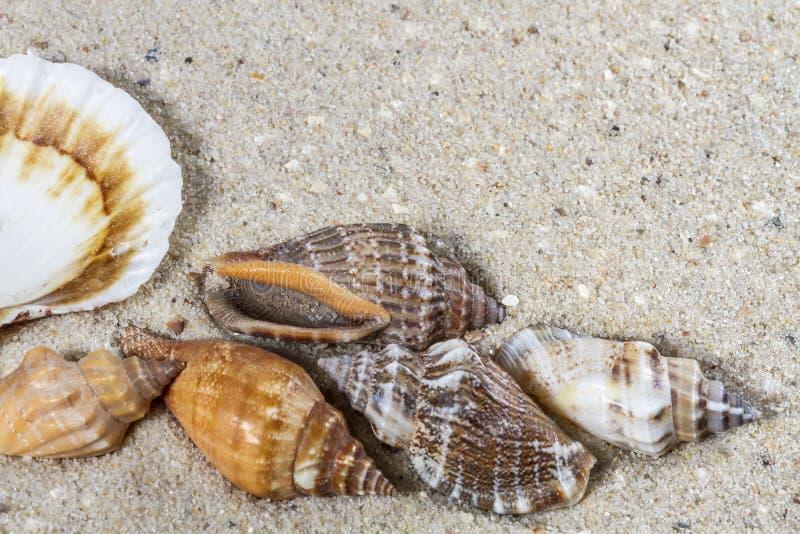 Fundo do curso com areia e shell foto de stock royalty free