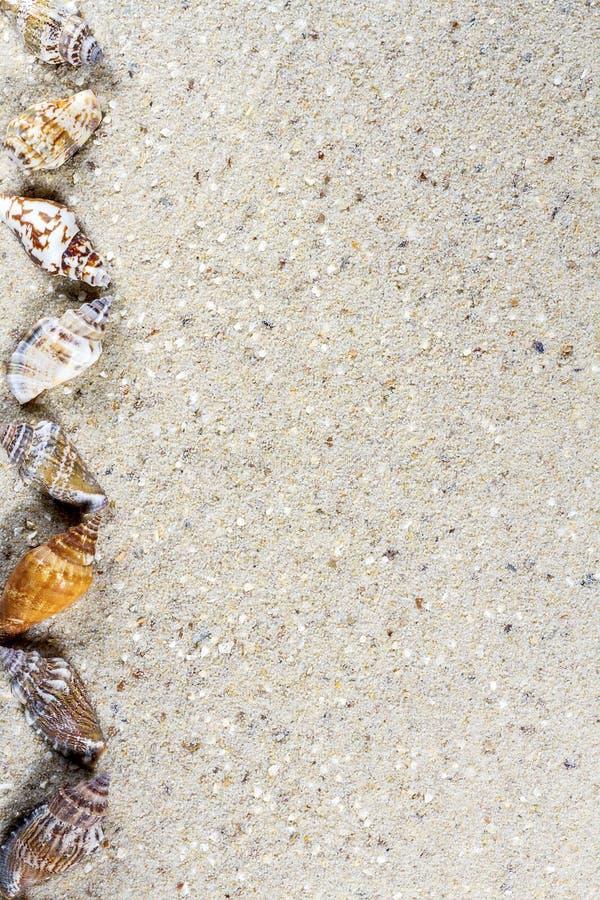 Fundo do curso com areia e shell fotos de stock royalty free