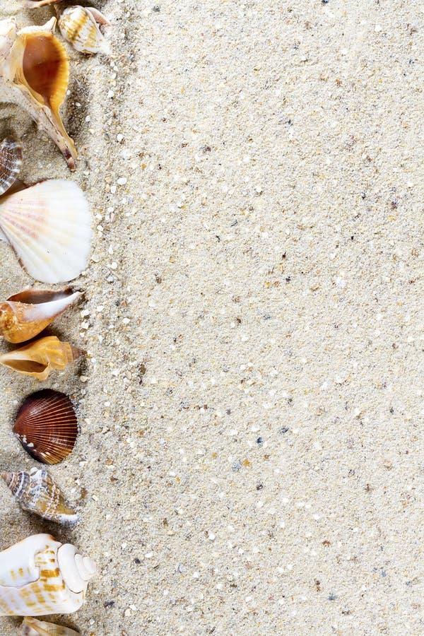 Fundo do curso com areia e shell imagem de stock