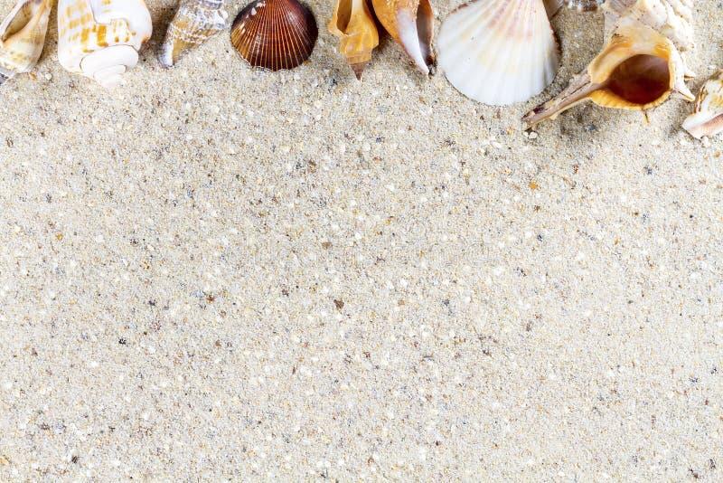 Fundo do curso com areia e shell imagem de stock royalty free