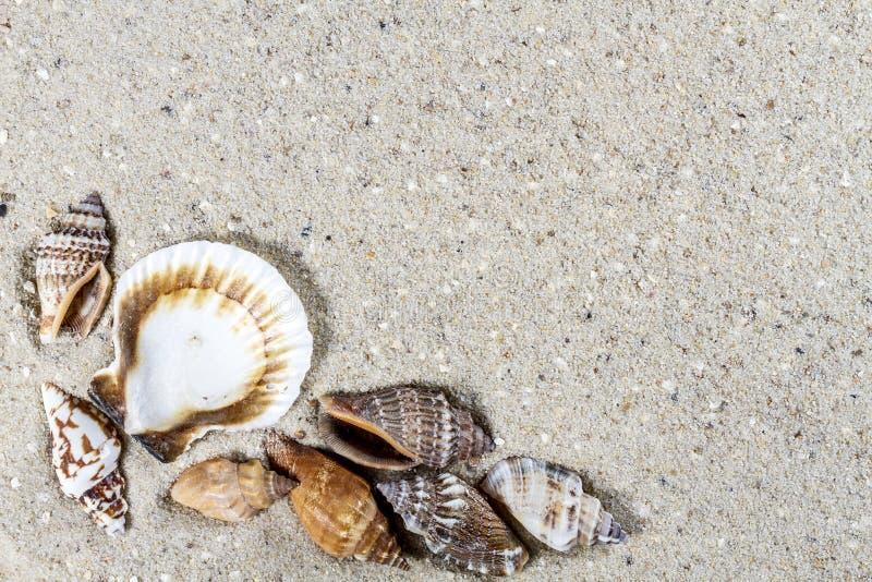 Fundo do curso com areia e shell foto de stock
