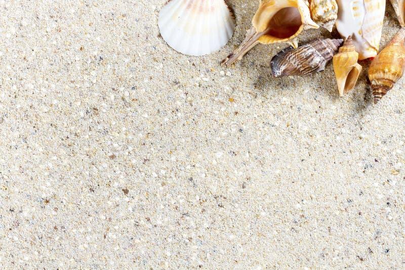 Fundo do curso com areia e shell imagens de stock