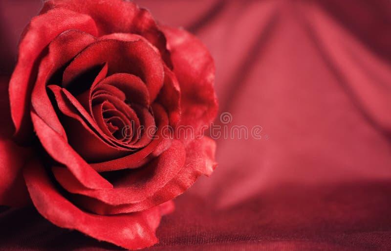 Fundo do dia de Valentim com rosa do vermelho imagens de stock
